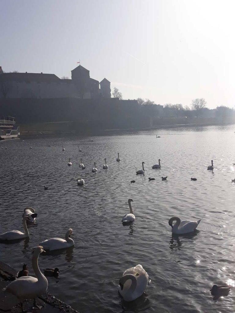 widok na Wawel w krakowie